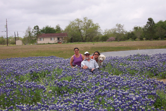 A field of bluebonnets; photo courtesy Kelly Smith