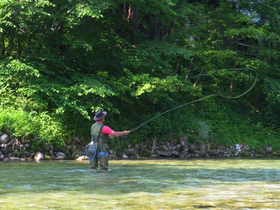 Fly fishing for rainbow trout in a stream; photo courtesy Ziga