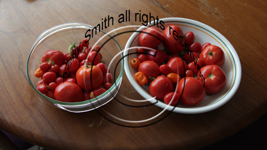 Delicious Organic Homegrown Tomatoes; photo courtesy Kelly Smith