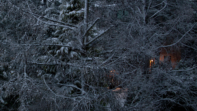 Snow lingering on tree limbs in winter; photo courtesy Glasseyes View