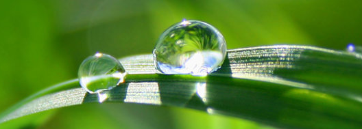 Water beads on a leaf; photo courtesy Brooke Chaplan